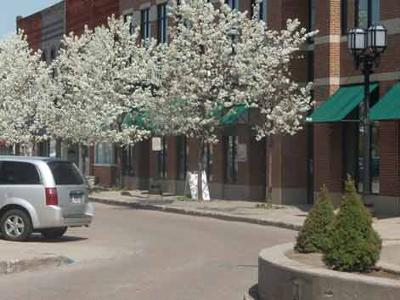 Spring Trees in Downtown Mt. Clemens, Michigan